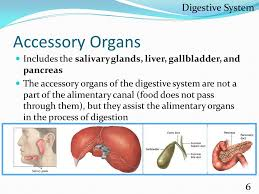 Accessory Organs Of The Digestive System Extraordinary Human Body Systems Alyssa Larson Ppt Download