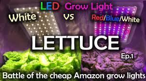 White Led Grow Light White Led Vs Red Blue White Led Grow Test W Time Lapse Lettuce Ep 1