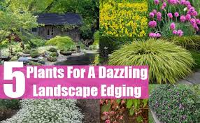 Border Plants The Gardening Blog In Garden Border With Plants | source