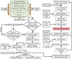 Giberellic Acid Stimulated Transcript Proteins Evolved