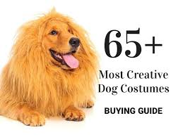 Ups Dog Costume Size Chart 65 Most Creative Dog Costumes Best Halloween Costumes For
