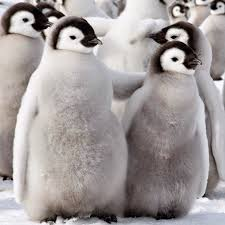 cute penguins. Fine Penguins Enjoy Some Cute Penguins U003dD With Cute Penguins N