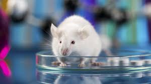 of mice and medicine the ethics of animal research