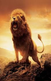 3d lion wallpapers free download. Wonderful Download Lion Wallpapers HD 11 Screenshot 5 And 3d Free Download A