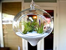 large hanging plant terrarium container