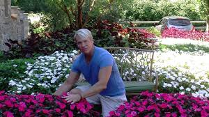 Phillip Watson Designs Sunpatiens Planted In Ground Phillip Watson