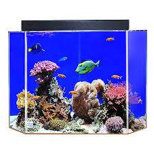 petsmart goldfish tank. Exellent Petsmart ClearForLife 50 Gallon Pentagon Aquarium Intended Petsmart Goldfish Tank