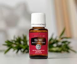 Hasil gambar untuk tea tree essential oil young living