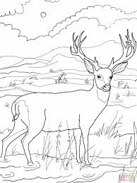 Small Picture Deer Coloring Pages Within Hunting itgodme