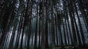 Dark Forest Desktop (Page 1) - Line ...