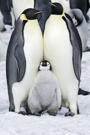 penguin. Wonderful Penguin With Penguin