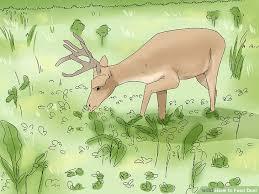 Deer Feeding Chart 2018 Ga 4 Ways To Feed Deer Wikihow