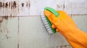 does vinegar kill mold how to get rid