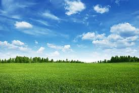 Royalty Free Grass Field Pictures Images and Stock Photos iStock
