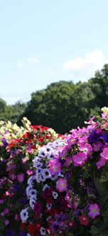 Iphone Wallpaper Colorful Flowers, Park ...