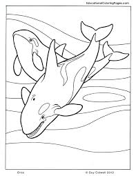 Small Picture Mammals Coloring Educational Fun Kids Coloring Pages and