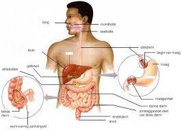 Alvleesklierontsteking acute maag