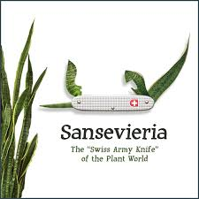 swiss army knife of the plant world
