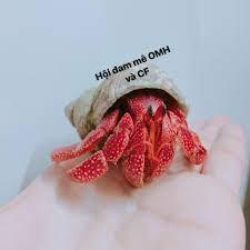 Hội những người yêu thích ốc mượn hồn và crayfish - Home