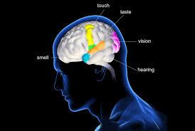 Light Touch Is Sensed By The Overview Of The Five Senses