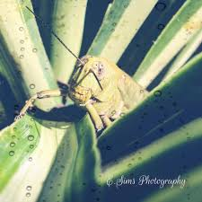 Emilia Sims Photography - Home | Facebook