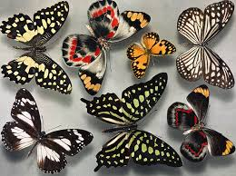 Butterfly Patterns Custom Patterns Genes And Butterfly Wings