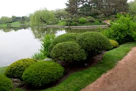 garden bushes. Astonishing Types Of Bushes For Modern Garden And Landscaping Ideas: Design Ideas