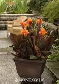 All My Friends Are Flowers Full Sun Container Planting Plan Container Garden Ideas Full Sun