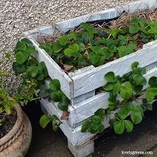 pallet wood planter. live video tour of 5 pallet wood planters \u0026 projects planter