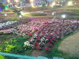 types of flowers. riverfront flower park: butterfly of flowers types