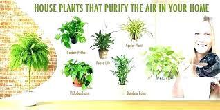 office plants for sale. Exellent Plants Indoor House Plants Sale Real  For   And Office Plants For Sale