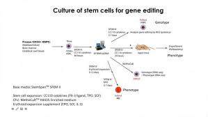 Videos Webinars Hematopoietic Stem And Progenitor Cell