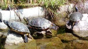 Vasche per tartarughe offerte e risparmia su ondausu