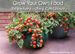 grow your own food using container gardening