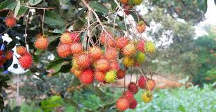 Which Tree Grows The Best In Kerala  UpdatedKerala Fruit Trees