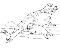 Seal Coloring Page Coloring Es Seal Coloring Es Navy Related Post