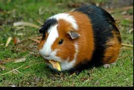 Rodents Lower Classifications Cute Animals Jadens Blog