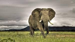 Elephant Desktop Wallpapers - Wallpaper ...