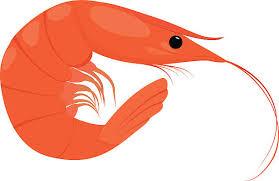 cooked shrimp clip art. Unique Clip Cooked Shrimp On White Background Vector Art Illustration And Shrimp Clip Art