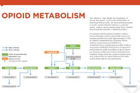 Opioid Metabolism Resource Cordant Health Solutions