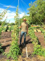 Kitchen Garden International Explore Kendall Jackson Estate Culinary Garden Best Of The West
