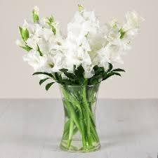 white gladiolus in a gl vase