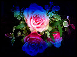 colorful rose wallpapers. Beautiful Wallpapers Glitter Roses Backgrounds  Wallpaper Colourful Roses Colorful Roses Blue  Flowers Red For Rose Wallpapers R