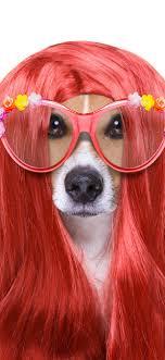 面白い動物犬髪型メガネ 1242x2688 Iphone Xs Max 壁紙背景画像