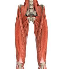 「大腿部と筋」の画像検索結果