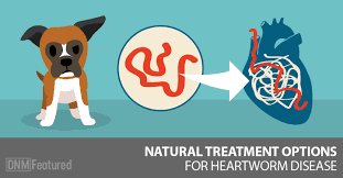 natural heartworm treatment. Natural Heartworm Treatment For Dogs T