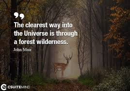 Forest Quotes Amazing Discover The Most Popular Topics Inspirational And Motivational Quotes