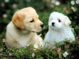cute dogs and puppies. Plain And 1920x1200  Throughout Cute Dogs And Puppies Y