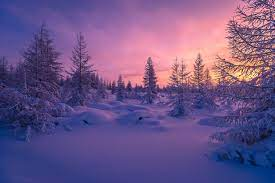 Pink Winter Sunset HD Wallpaper ...