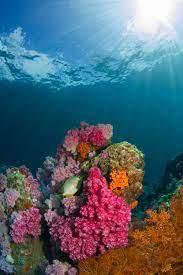 900+ Aquarium Background Images ...